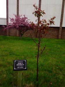 FHS Memorial Tree